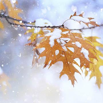 Φθινόπωρο - Χειμώνας