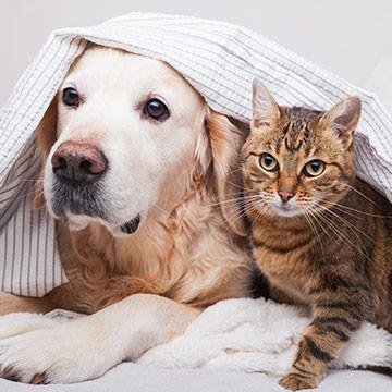 Κατοικίδια - Pet